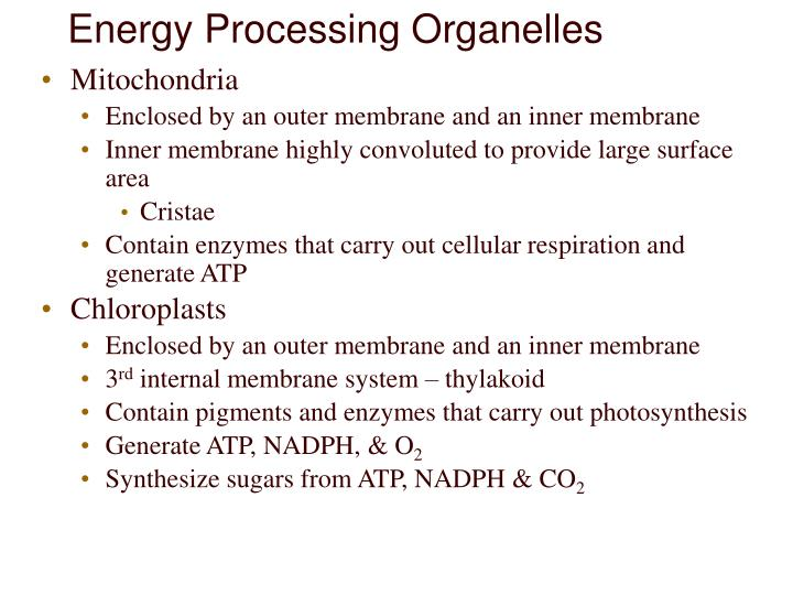 Energy Processing Organelles