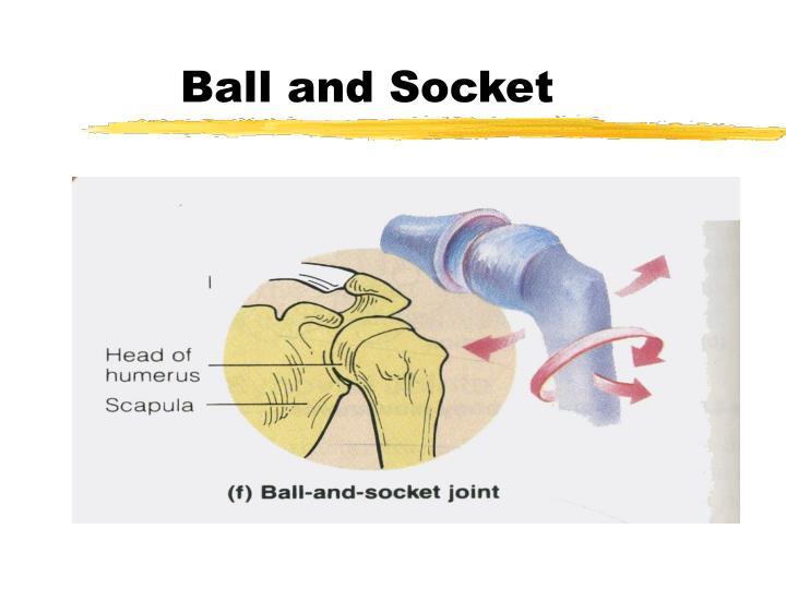 Ball and Socket