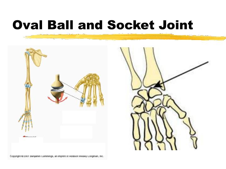 Oval Ball and Socket Joint