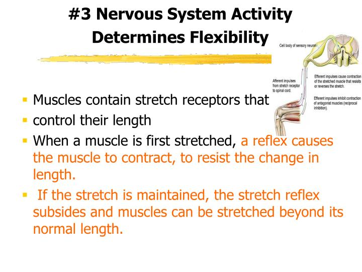 #3 Nervous System Activity