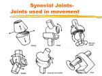 synovial joints joints used in movement
