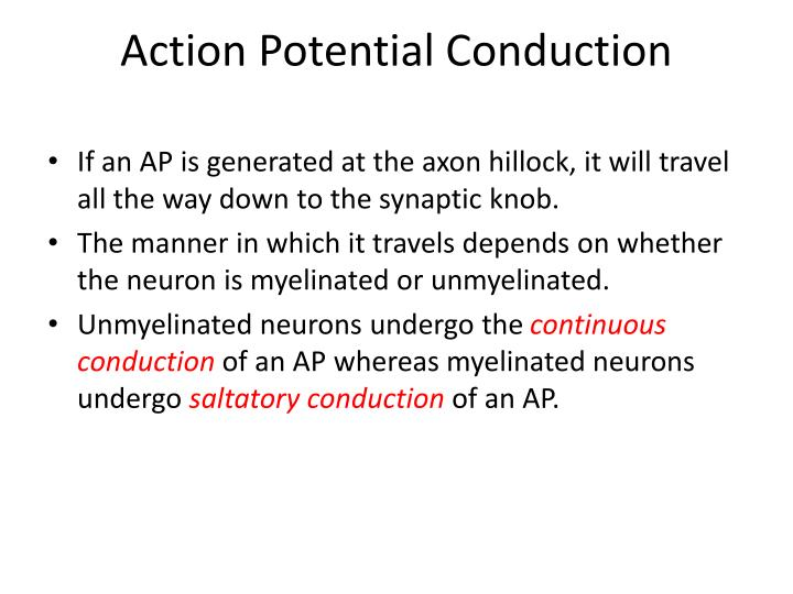 Action Potential Conduction