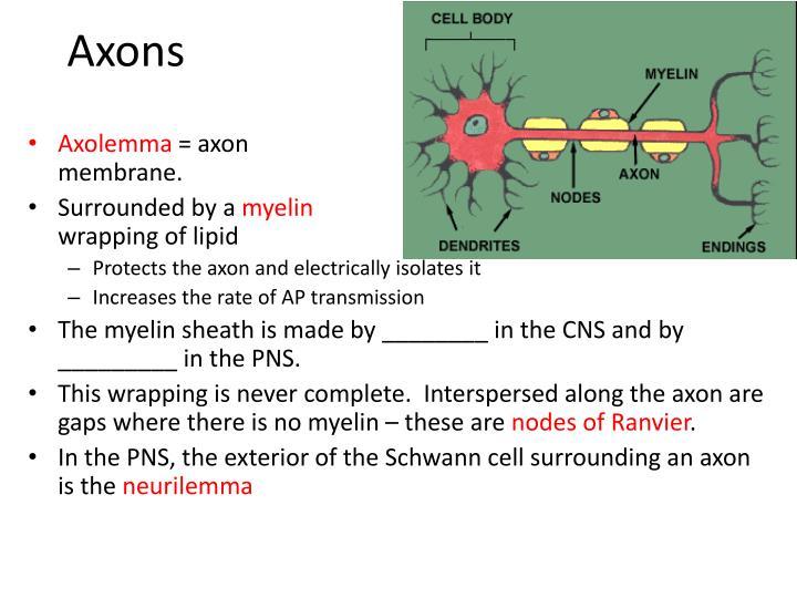 Axons