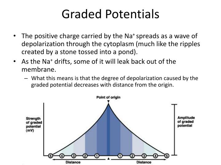 Graded Potentials