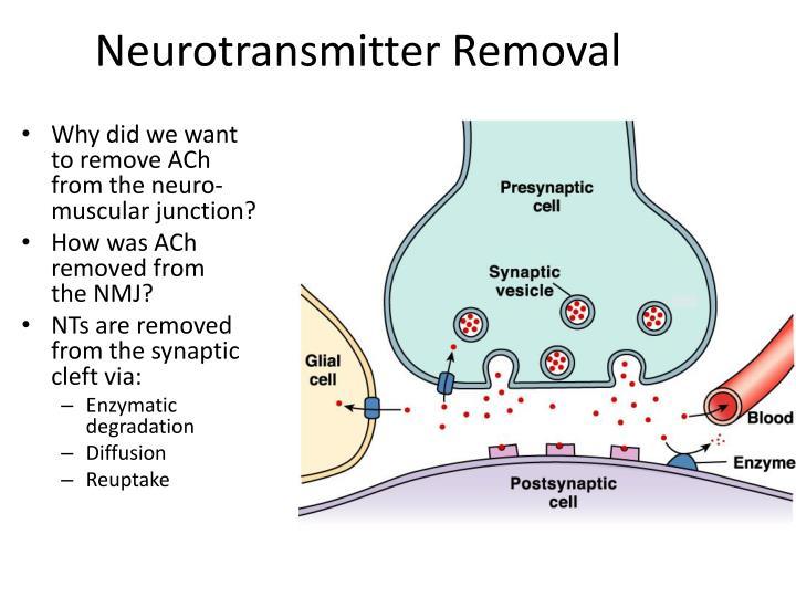 Neurotransmitter Removal