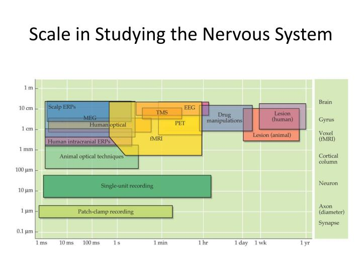 Scale in Studying the Nervous System