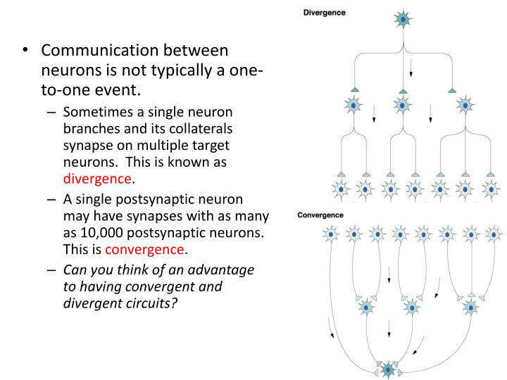 Communication between neurons is not typically a one-to-one event.