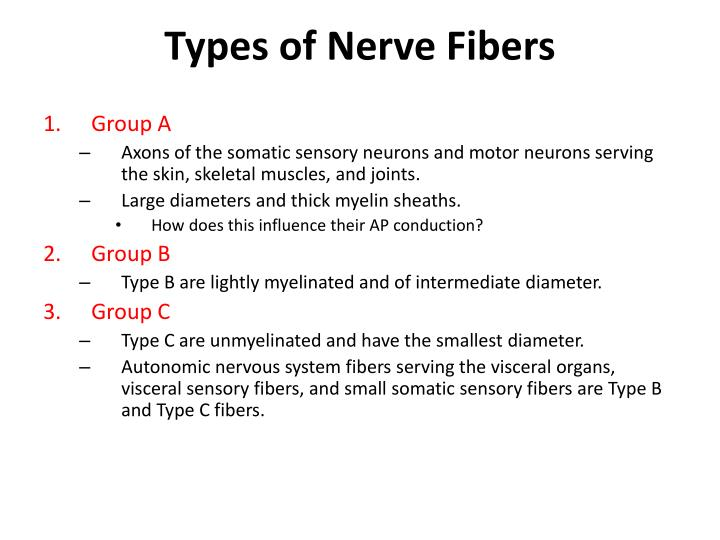 Types of Nerve Fibers
