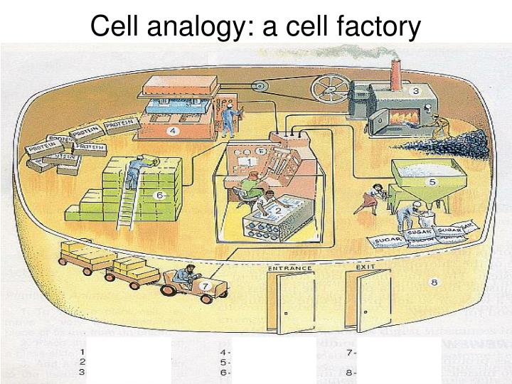 Cell analogy: a cell factory