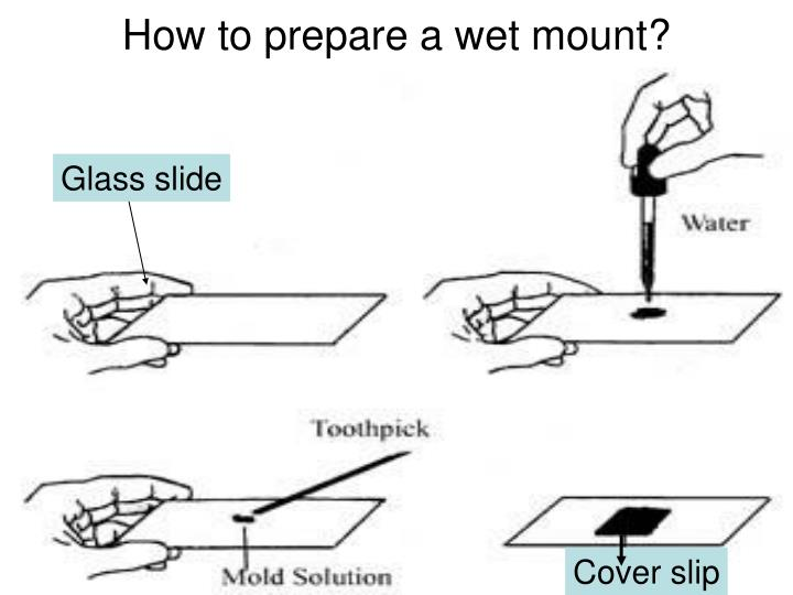 How to prepare a wet mount?