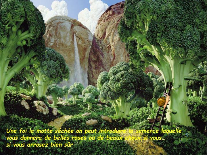 Une foi la motte sche on peut introduire la semence laquelle