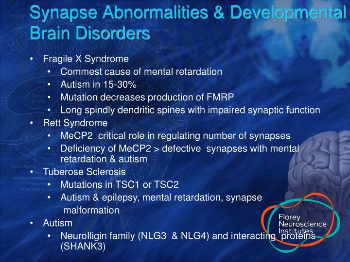 Synapse Abnormalities & Developmental Brain Disorders