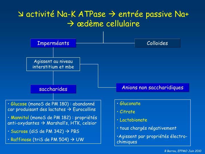 activité Na-K ATPase  entrée passive Na+