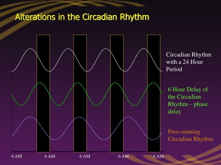 Circadian Rhythm with a 24 Hour Period