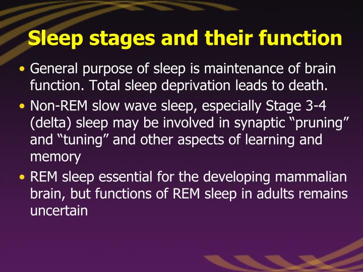 Sleep stages and their function