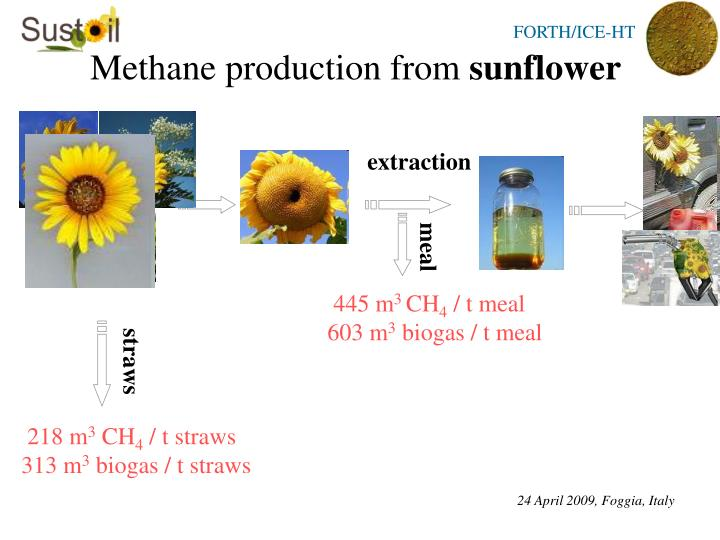 Methane production from