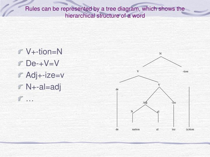 Rules can be represented by a tree diagram, which shows the hierarchical structure of a word