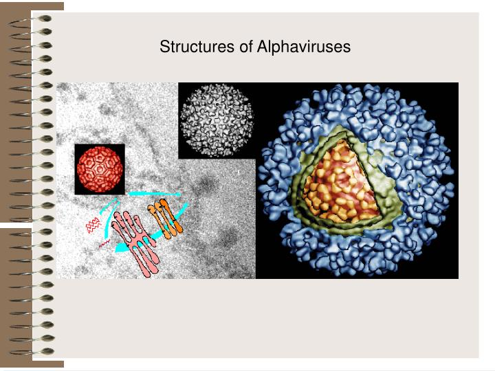 Structures of Alphaviruses