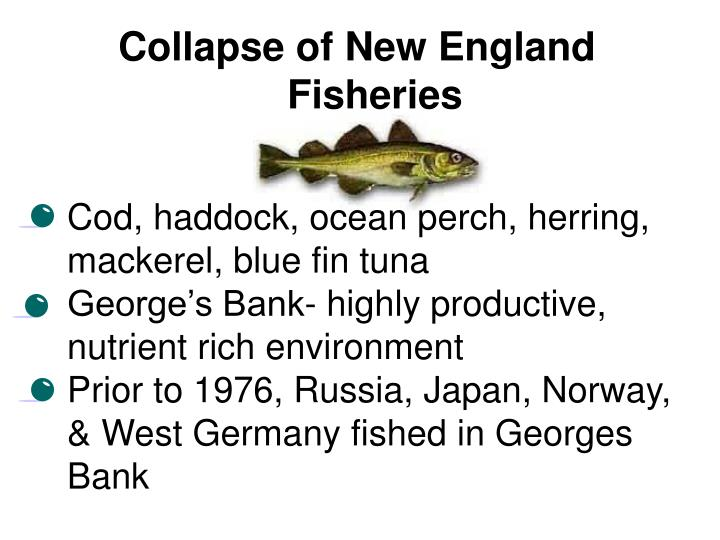 Collapse of New England Fisheries