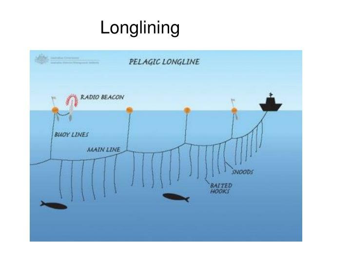 Longlining