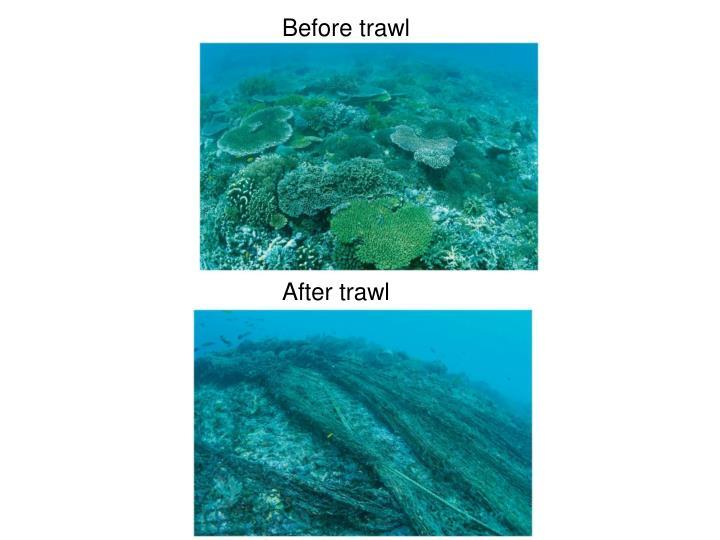 Before trawl