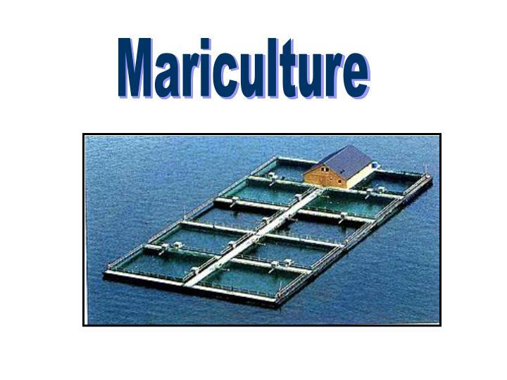 Mariculture