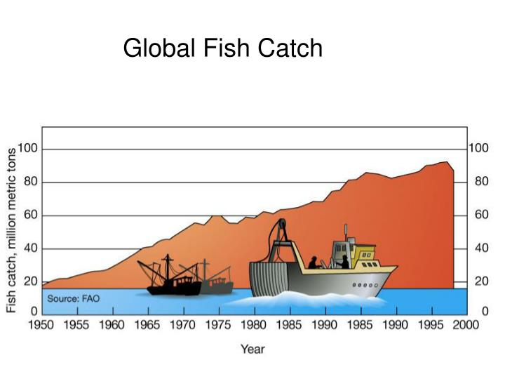 Global Fish Catch