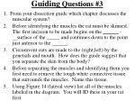 guiding questions 31