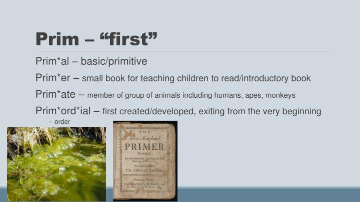 "Prim – ""first"""