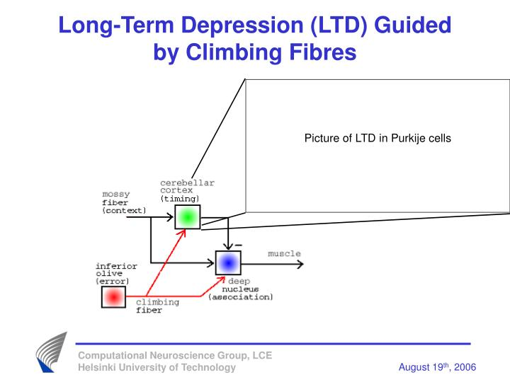 Long-Term Depression (LTD) Guided by Climbing Fibres