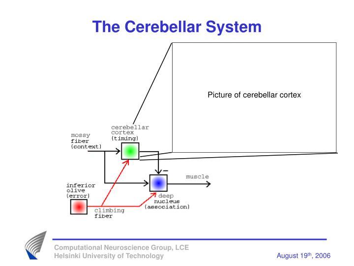 The Cerebellar System