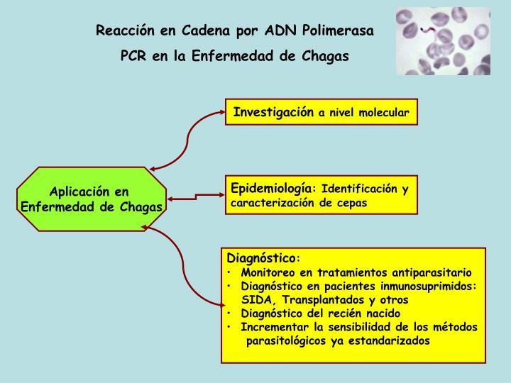 Reacción en Cadena por ADN Polimerasa
