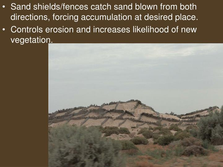 Sand shields/fences catch sand blown from both directions, forcing accumulation at desired place.