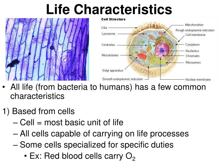 Life Characteristics