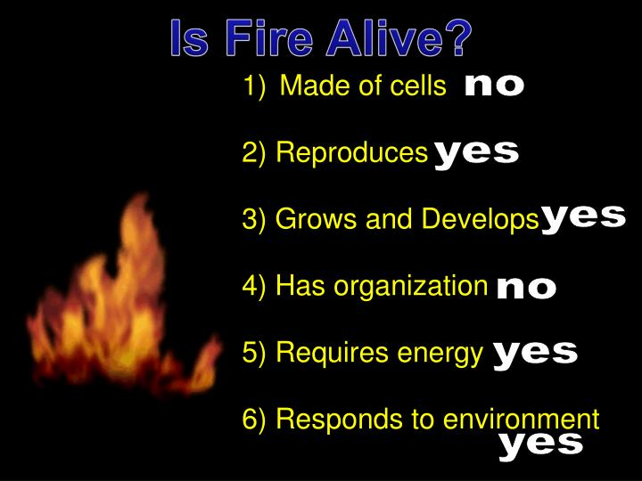 Is Fire Alive?