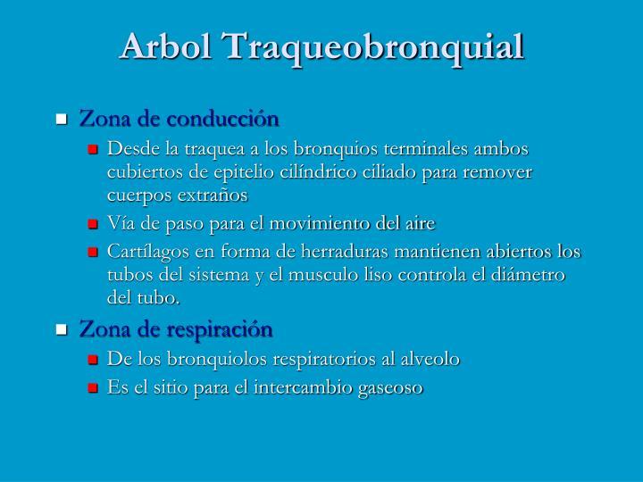 Arbol Traqueobronquial