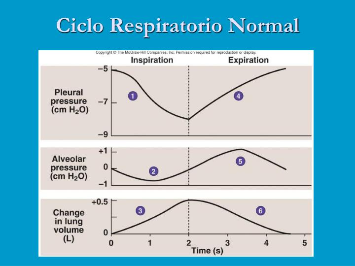 Ciclo Respiratorio Normal