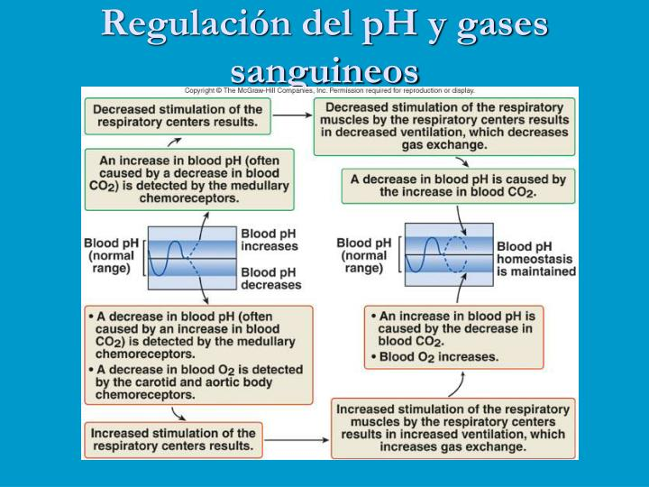Regulación del pH y gases sanguineos