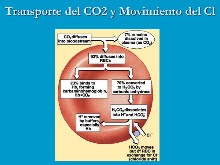 Transporte del CO2 y Movimiento del Cl