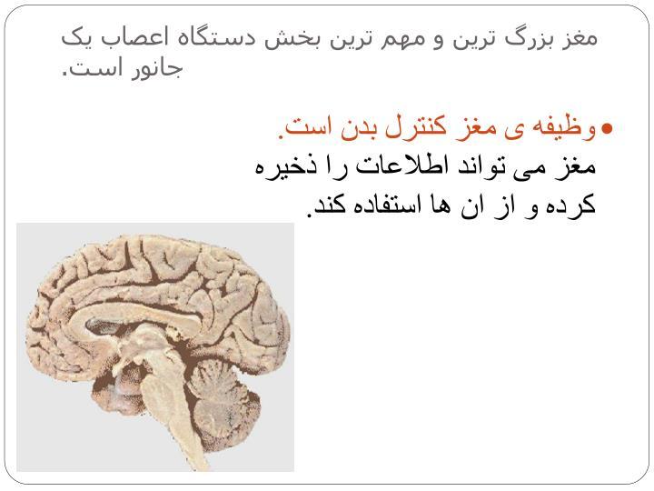 مغز بزرگ ترین و مهم ترین بخش دستگاه اعصاب یک جانور است.
