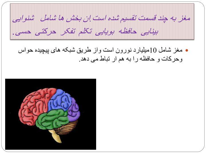 مغز به چند قسمت تقسیم شده است.ان بخش ها شامل   شنوایی  بینایی  حافظه  بویایی  تکلم  تفکر  حرکتی  حسی