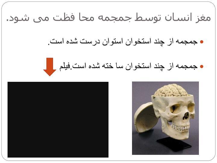 مغز انسان توسط جمجمه محا فظت می شود.