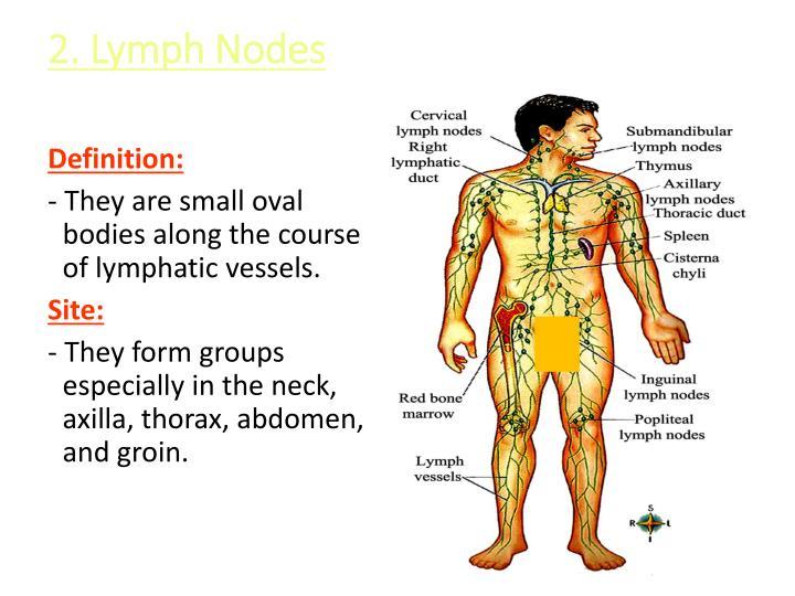 2. Lymph Nodes