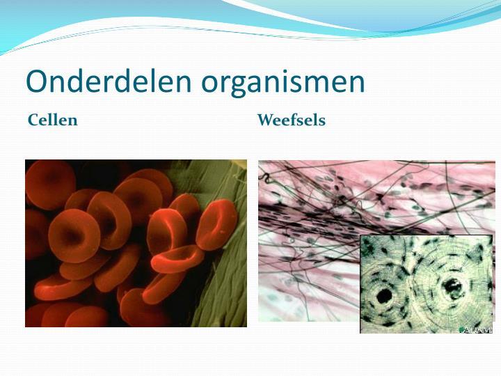 Onderdelen organismen