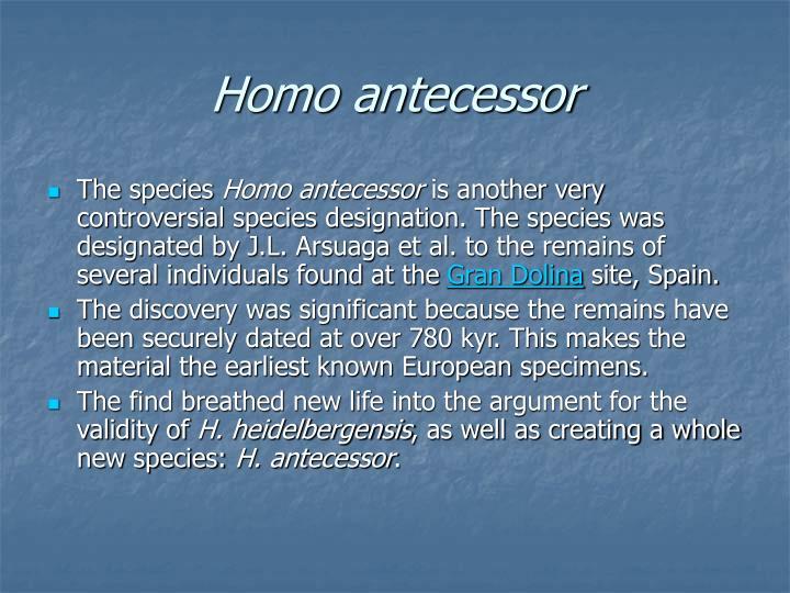 Homo antecessor