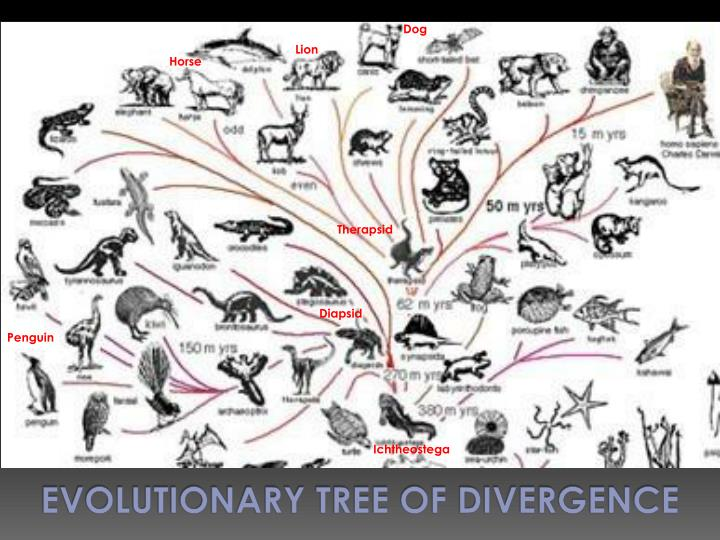 Evolutionary Tree of Divergence