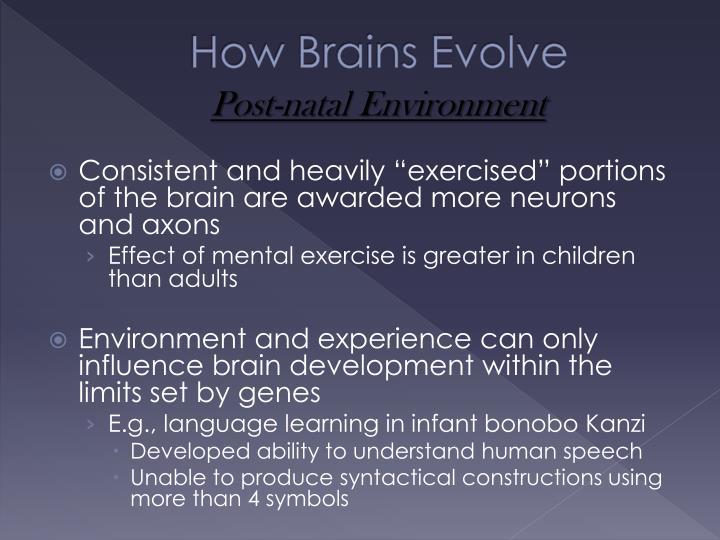 How Brains Evolve