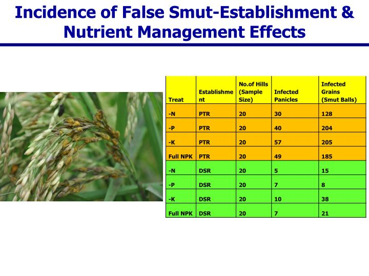 Incidence of False Smut-Establishment & Nutrient Management Effects