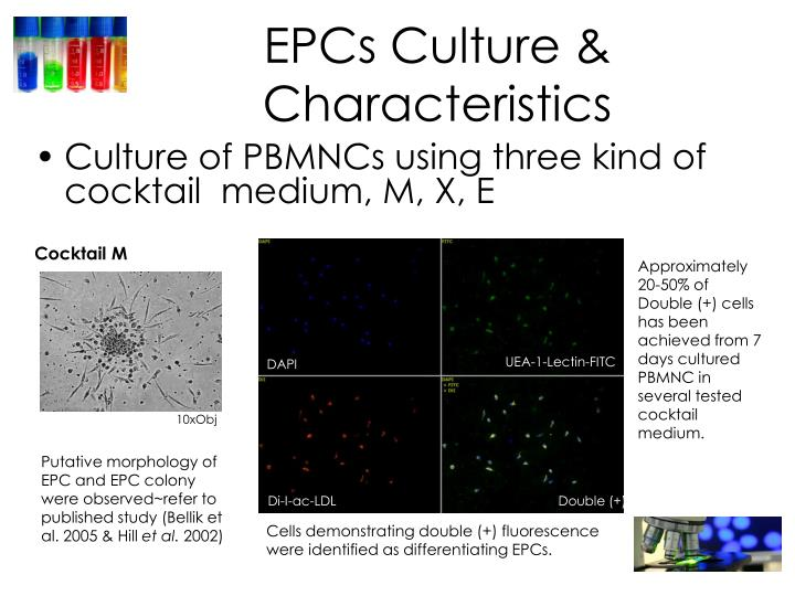 EPCs Culture & Characteristics