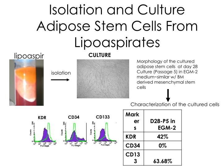 Isolation and Culture Adipose Stem Cells From Lipoaspirates